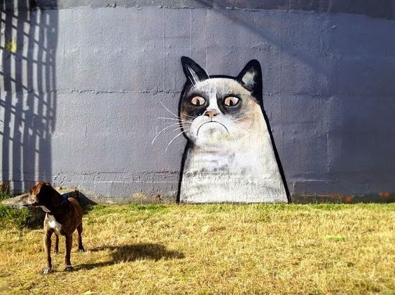Grumpy Cat in Auckland New Zealand by Paul Walsh