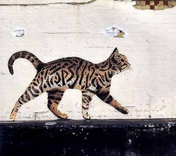 Cat by jps